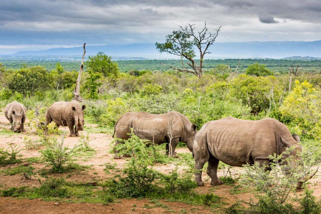 Swaziland 2018